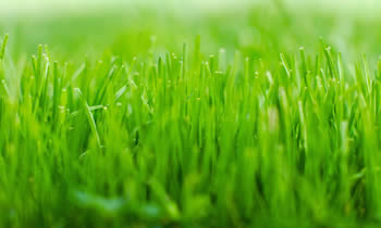 Lawn Service in Fort Worth TX Lawn Care in Fort Worth TX Lawn Mowing in Fort Worth TX Lawn Professionals in Fort Worth TX