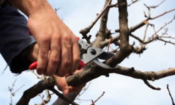 Tree Pruning in Fort Worth TX Tree Pruning Services in Fort Worth TX Quality Tree Pruning in Fort Worth TX