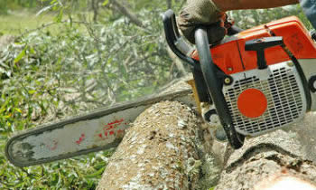 Tree Removal in Fort Worth TX Tree Removal Quotes in Fort Worth TX Tree Removal Estimates in Fort Worth TX Tree Removal Services in Fort Worth TX Tree Removal Professionals in Fort Worth TX Tree Services in Fort Worth TX